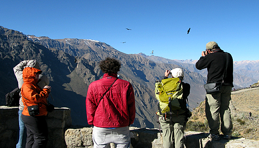 Condor Watching Tour In The Colca Canyon